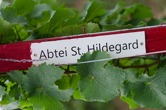 La plupart des recettes d'Hildegarde sont préparées à base de vin. Si son monastère était logé au milieu des vignobles allemands, c'est pour une autre raison que l'abbesse préférait l'utilisation du vin à celle de l'eau. A cette époque, l'eau des puits était polluée alors que le vin, moins alcoolisé était aussi mélangé avec des épices et des aromates.