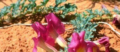 Les bienfaits de l'Harpagophytum pour DIETAROMA